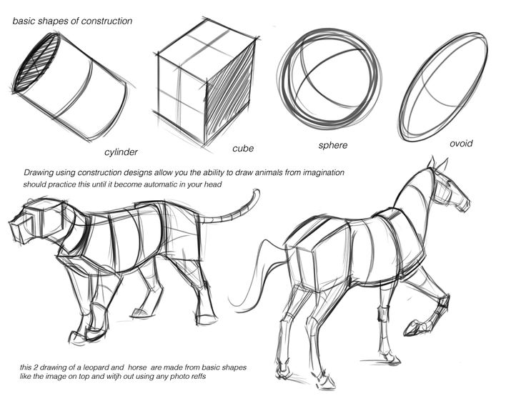 278 best creature anatomy images on pinterest draw drawings and animal anatomy - Animal Anatomy Coloring Book