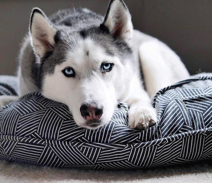 how to make husky talk