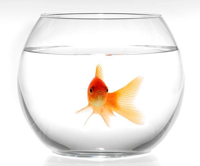 Круглый аквариум | Маленький круглый аквариум