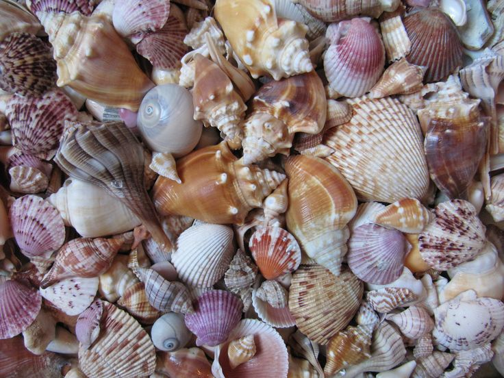 Sanibel Island, Florida: A Beachcomber's Bonanza
