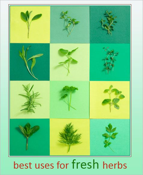 How To Use Herbs | How To Store Herbs | Best Uses For Fresh Herbs