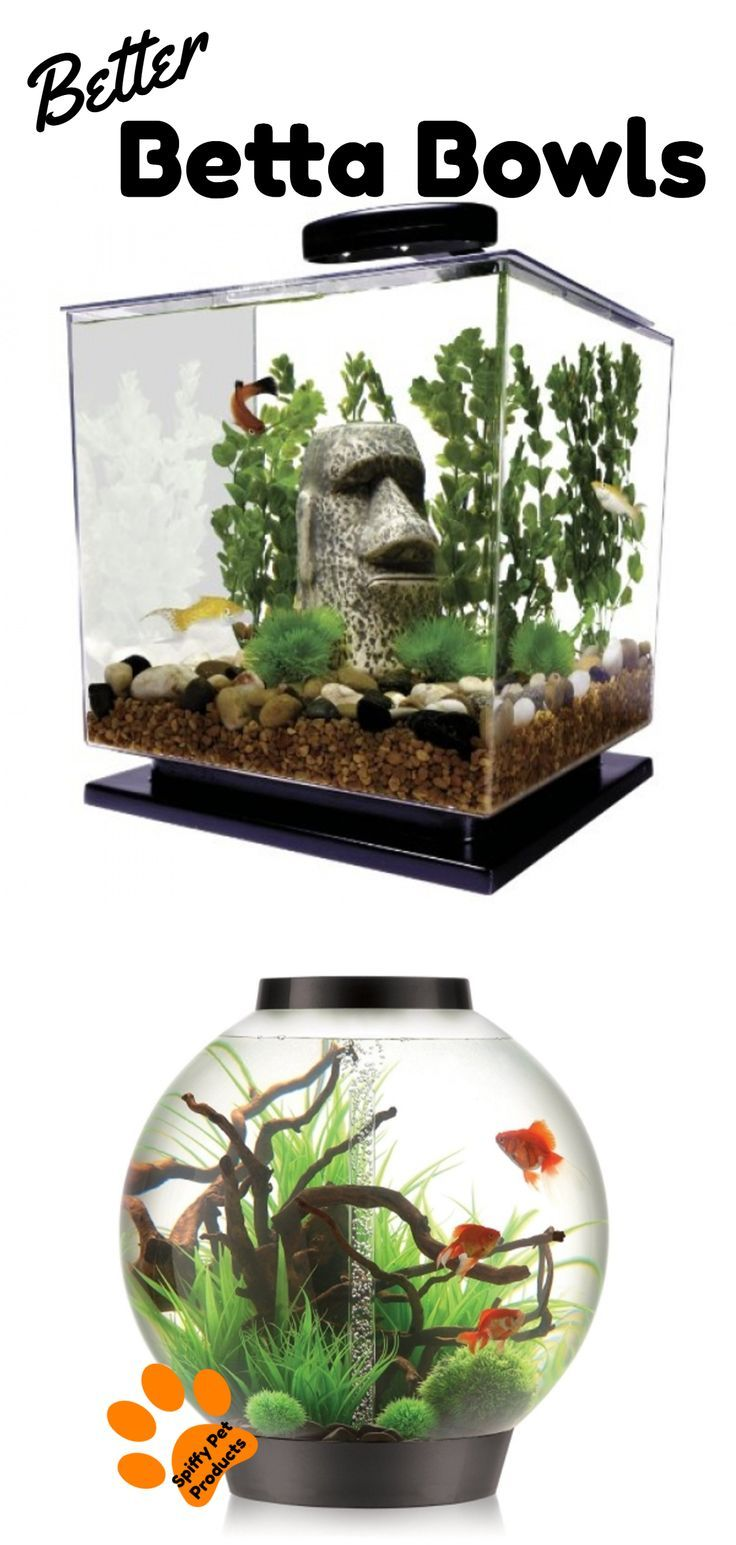 Pin On Bettas Bonita