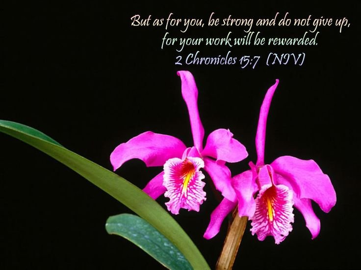 """""""But as for you, be strong and do not give up, for your work will be rewarded.""""  2 Chronicles 15:7 (NIV)"""