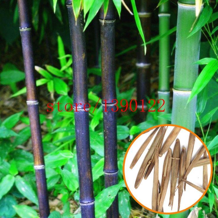 20pcs/bag black Bamboo Seeds,Very Rare Perennial Bamboo Phyllostachys Nigra Nature plants for home garden