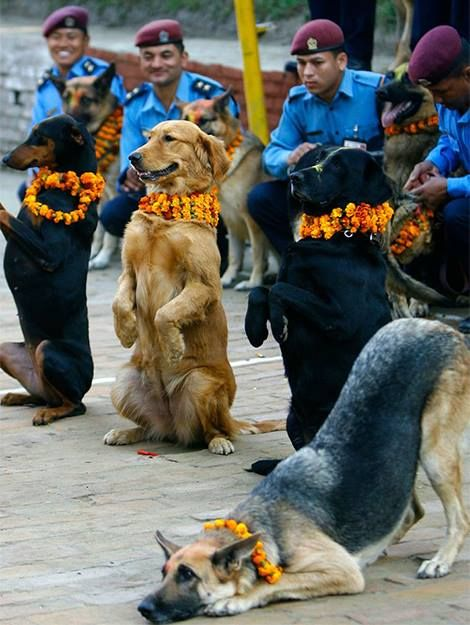 cop's dog in Nepal. after being worshiped