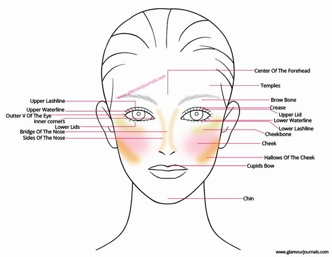 Face Anatomy For Makeup