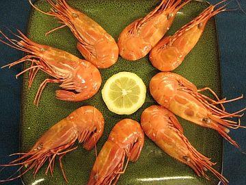 Hoodcanal Spotted Shrimp