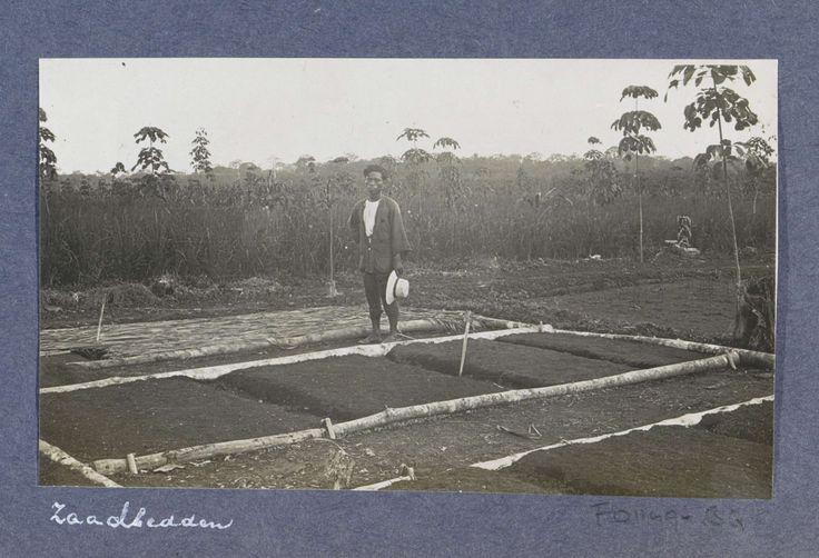 Anonymous | Indische man bij een zaadbed op een rubberplantage op Sumatra, Anonymous, c. 1900 - c. 1920 | Onderdeel van Reisalbum met foto's van bedrijvigheid en bezienswaardigheden op Sumatra en Java en van de reis naar en van Nederlands-Indië.