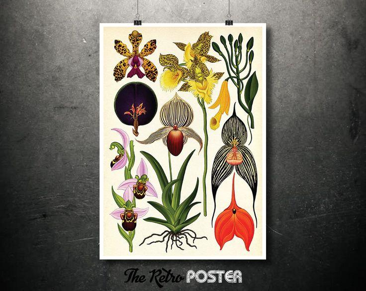 Kitchen Decor - Botanicum (Orchids) by Katie Scott - Plant, Plants, Plant Print, Nature Prints, Botanical Poster Vintage, Kitchen Gifts by TheRetroPoster on Etsy