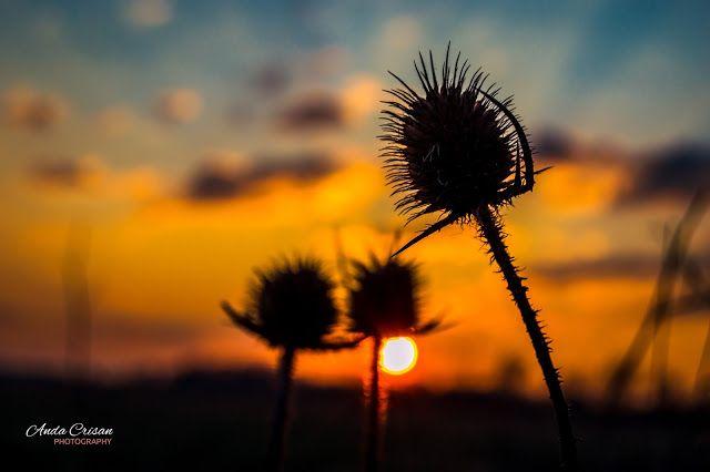 Photography...my love, my passion: Apusuri de Colecție