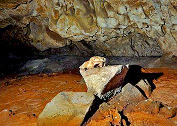 Crâne Ours Grotte Chauvet