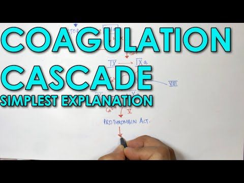 Coagulation Cascade SIMPLEST EXPLANATION !! The Extrinsic and Intrinsic Pathway of HEMOSTASIS - YouTube