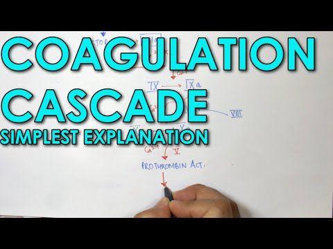 Coagulation Cascade SIMPLEST EXPLANATION !! The Extrinsic and Intrinsic Pathway of HEMOSTASIS - YouTube