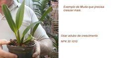 Aprenda como adubar orquídeas com todos os tipos de adubo, o adubo de manutenção, de enraizamento, o de crescimento, de floração e todos os tipos de adubos!