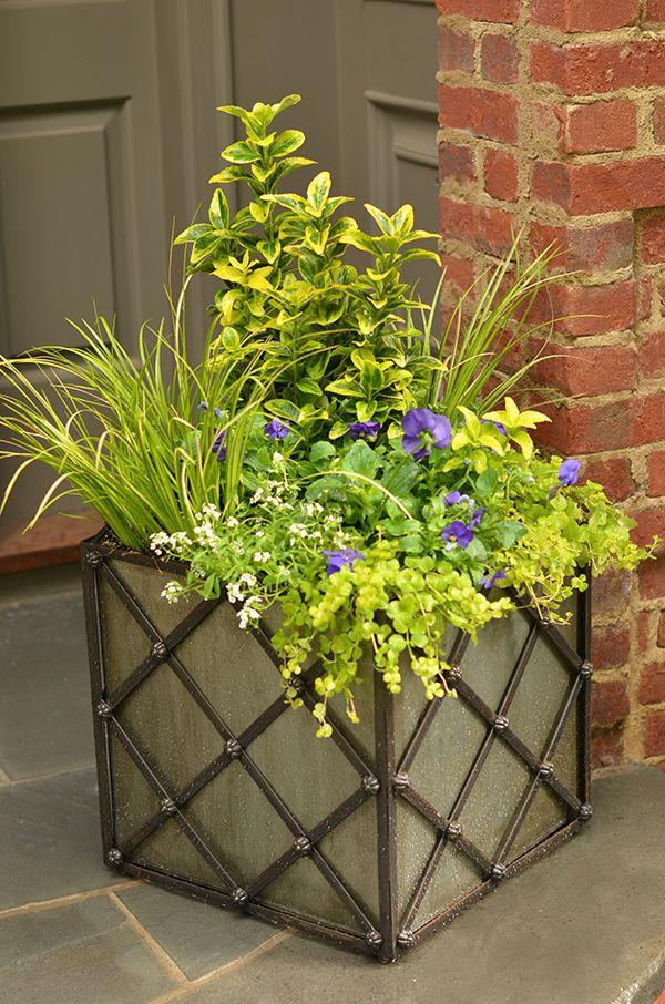 Planter-Ornamental grasses, evergreen, golden creeping jenny, violas and sweet alyssum