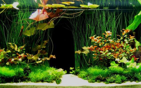 Tropical fish tank that truly looks vibrant and stunning