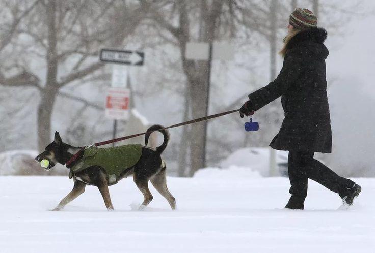 «А у нас управдом друг человека». В Лабытнанги берут под контроль выгул собак   В Лабытнанги в рамках программы «Формирование комфортной и современной городской среды» решают вопрос с выгулом домашних животных и обустройством специализированных площадок, где хозяева могли бы дрессировать своих животных.   Насущными вопросами также являются: увеличение бездомных собак на городских улицах и собак с ошейниками, владельцев которых нужно выявлять и привлекать к административной ответственности…