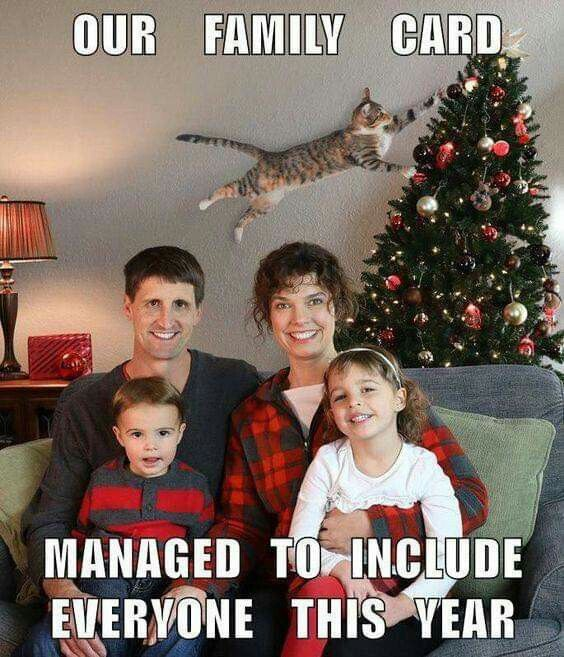 Family Christmas Meme Funny.Our Family Card Managed To Include Everyone This Year