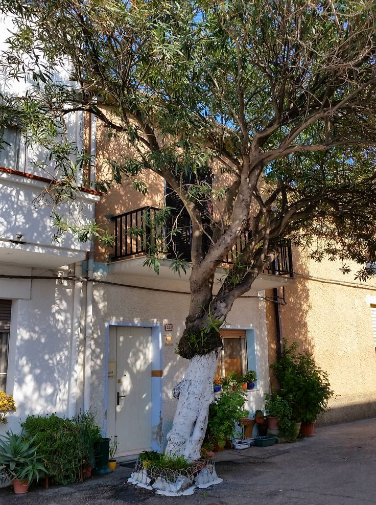 Oleandro in Via Regina Margherita a #Calasetta nella Sardegna Sud-ovest