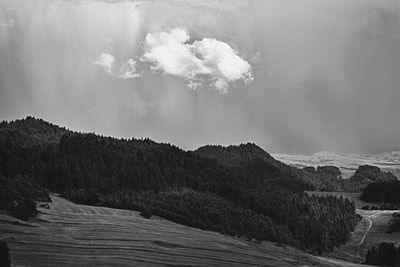 bwstock.photography - photo | free download black and white photos  //  #cloud #forest #landscape