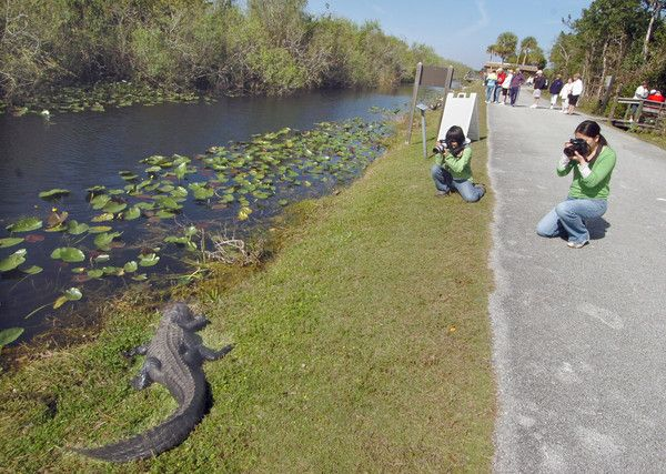 Shark Valley Everglades National Park U S 41 Tamiami