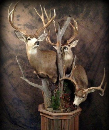 20 creative mule deer mounts | goHUNT