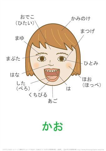 言葉の絵カード「顔」