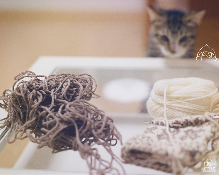 🍒 YARN BALL HUNTERS 🌀🌀🌀🌀🌀 They had been having a game of romps with the yarn ball… 😱 * #catlife #lovecats #catlovers #catoftheday #persephone #ポネ #faeriaforestcat #sakurawitch #faerie #fae #cobito #knitting #knitwitch