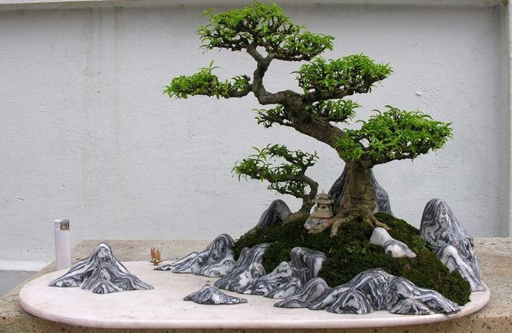 Bonsai... -Tiny Perfection