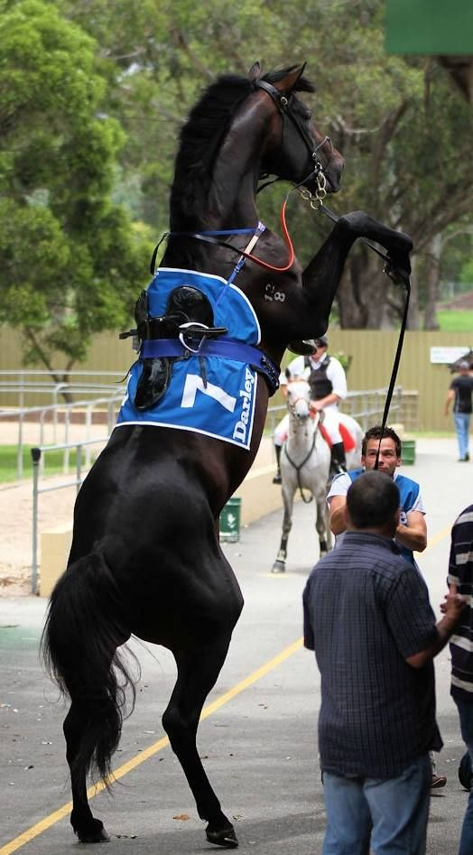 the anti-rearing bit - necessary or gimmick? Horse Problems Australia