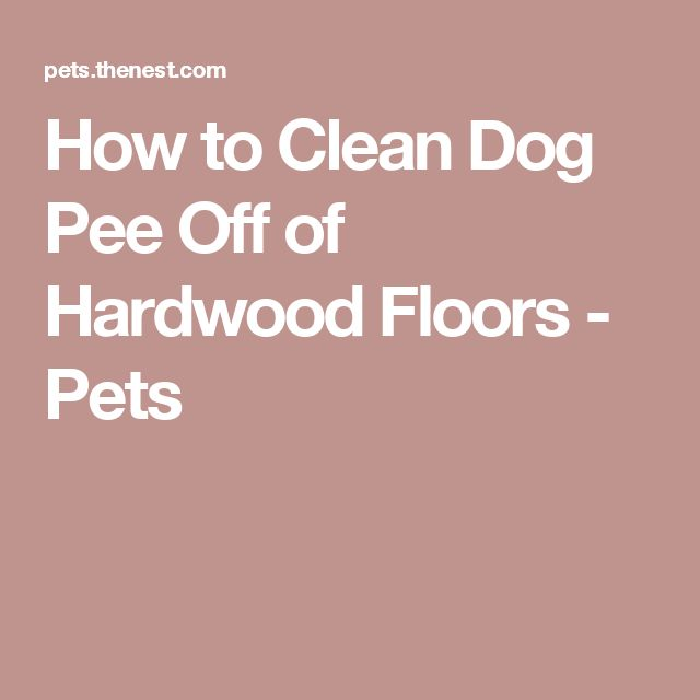 best 25+ cleaning dog pee ideas on pinterest | dog pee, pet stain