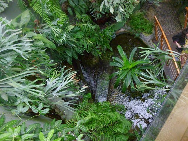 Palm in Gardens, Poland, Gliwice, Palmiarnia, Ogród botaniczny