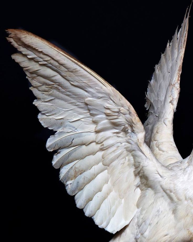 крыло птицы фотографии некоторых