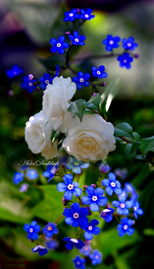 Pin By Ada Dalilah On Roses Art Creative Montage In 2020 Flowers Photography Pretty Flowers Beautiful Flowers