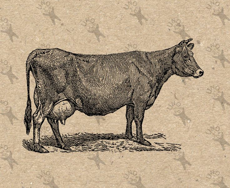 Vintage image Cow Instant Download Digital printable clipart graphic Burlap Fabric Transfer Iron On Pillows Totes Tea Towels  etc HQ 300dpi by UnoPrint on Etsy