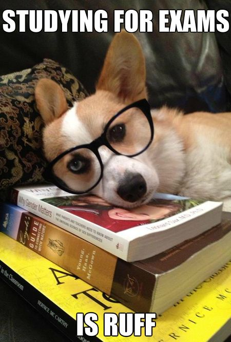 The Best Study Snacks for Finals Week - eduinreview.com