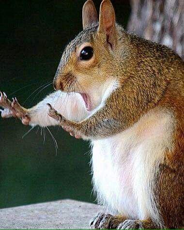 Whoa! Step away from my peanuts!