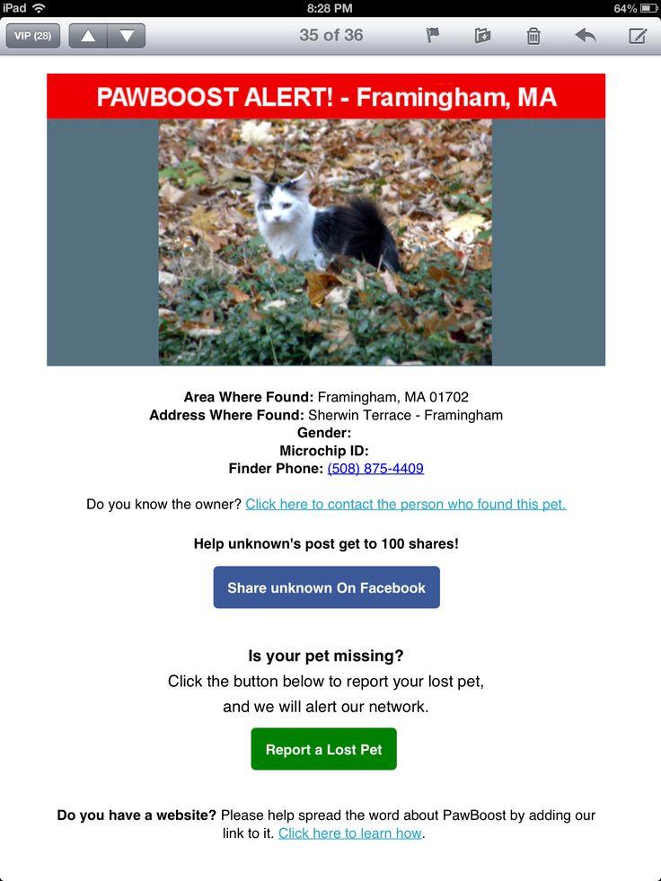Lost Cat: Framingham, MA