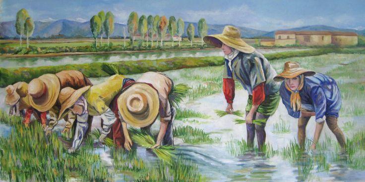 Dalle mondine ai 'moderni diserbanti' che, oggi, svolgono parte del compito che era delle ragazze. La coltivazione del riso, introdotta dalla Spagna, che a
