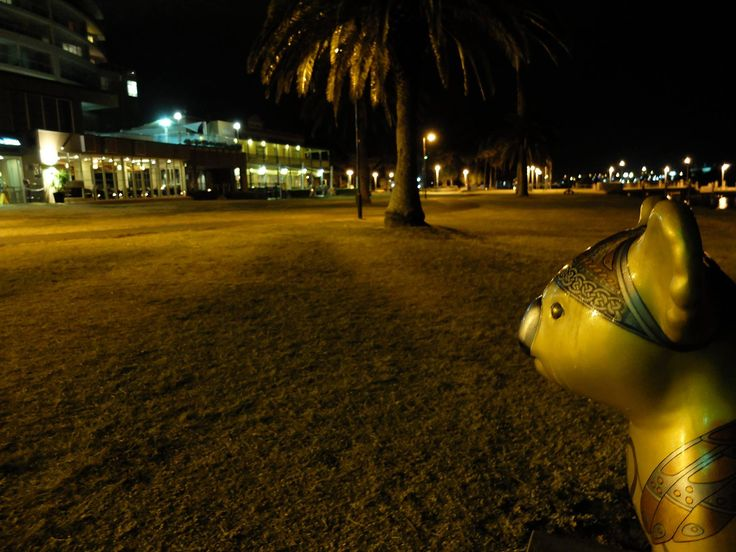 "HelloKoalas Trail Port Macquarie painted by Port Macquarie Artist Yvonne Kiely.  Aptly named ""Celtic Koala""... He is keeping guard on Town Green"
