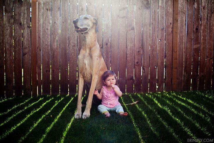 makes me want a little girl!: Great Danes, Happy Birthday, Pet Photography, Dogs Photography, Baby Dogs, Vey Photography, Future Kids, Big Dogs, Erin Vey