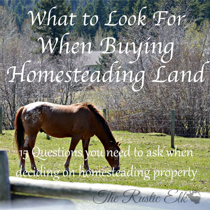 Looking to buy land to homestead? Here are 15 questions you need to ask when deciding on homesteading property.