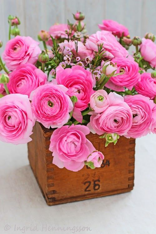 Pink ranunculus stems in a wooden box
