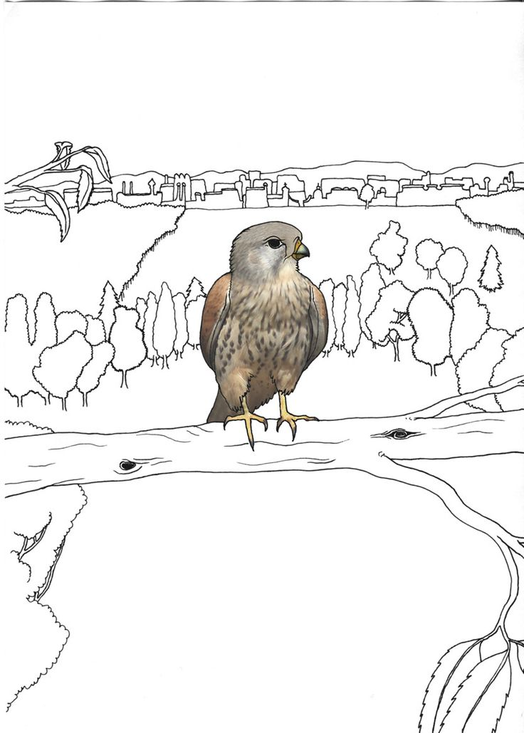 """the kestrel"", Stanislaus Medan, 2014 #animals #park #grafic #children #drawing #collage #fotocollage #kestrel #bird #overview"