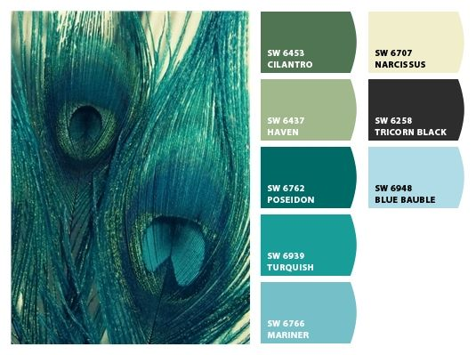 Colors Of Blue best 25+ peacock colors ideas on pinterest | about peacock, pretty