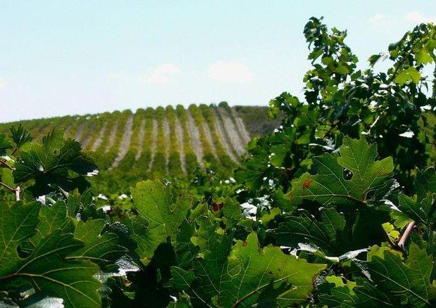 #agricoltura italiana è la più #green in Europa #bioeticonet