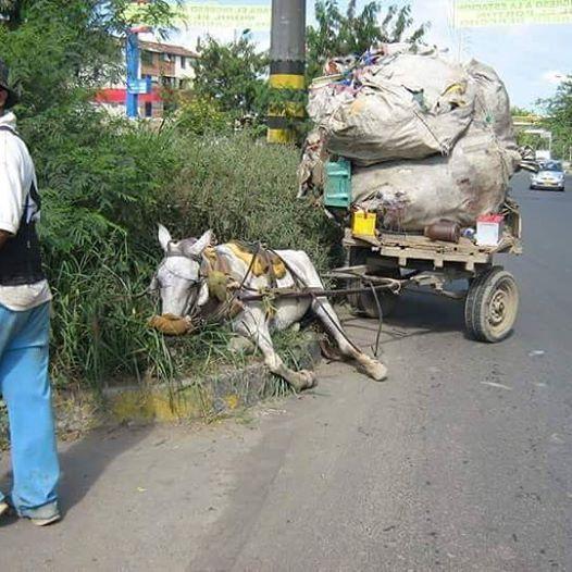 RS Notícias: Maus tratos aos animais