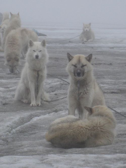 Images and information about Wolves.