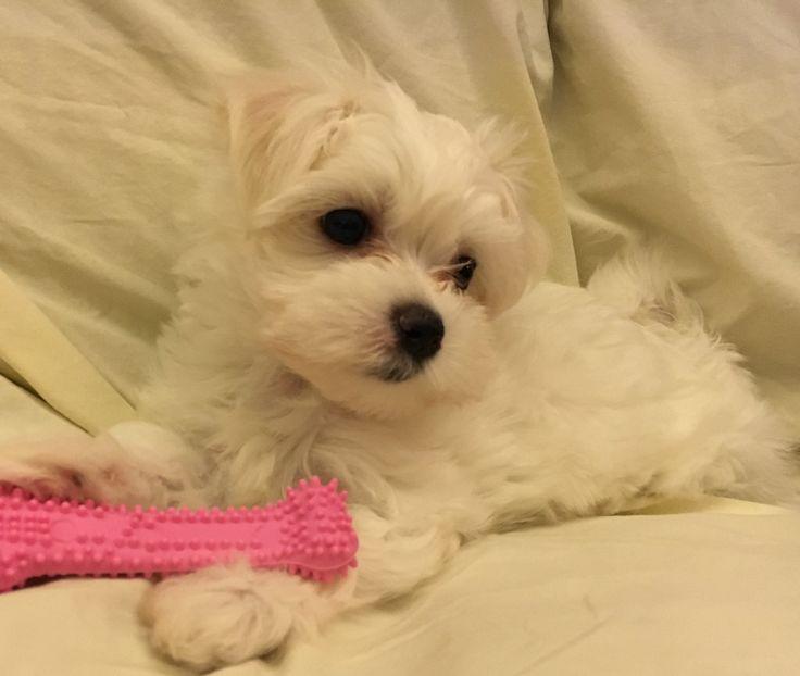 Here's Pinki