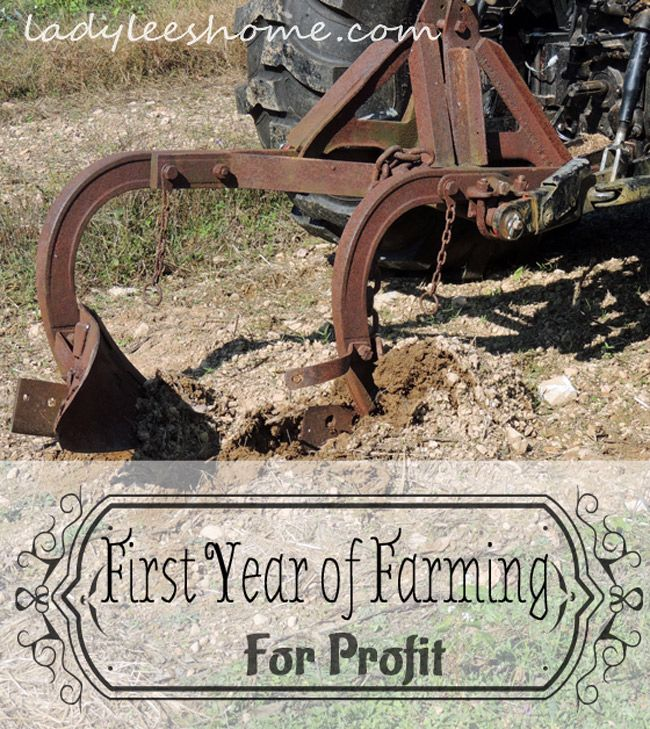First Year of Farming For Profit - It Begins!   I can't sleep at night. I feel excited but anxious, brave but overwhelmed, capable but scared, cheerful but slightly panicked. Can I really join this elite group of people who call themselves farmers? Can I really grow food not only for ourselves but others as well? Can I really make a living from the land?
